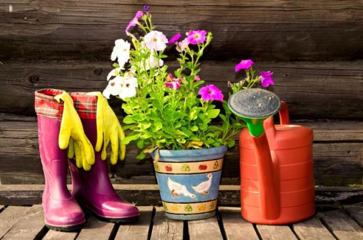 Ищем героиню которая любит домашние растения и знает много лайфхаков